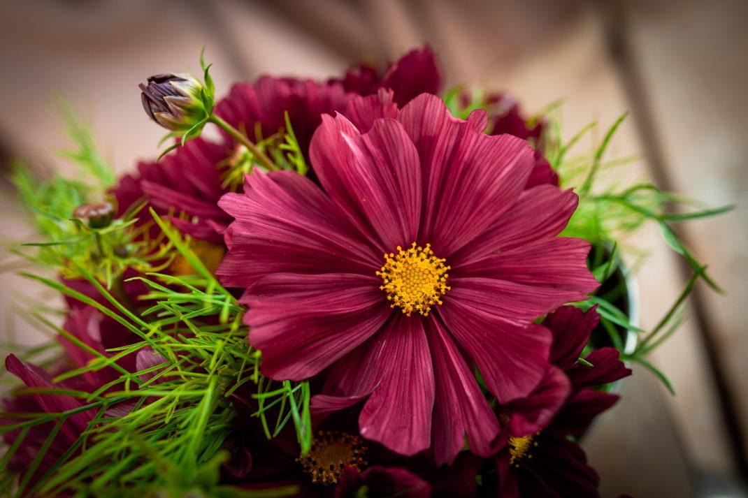 Bukett med rosa blommor