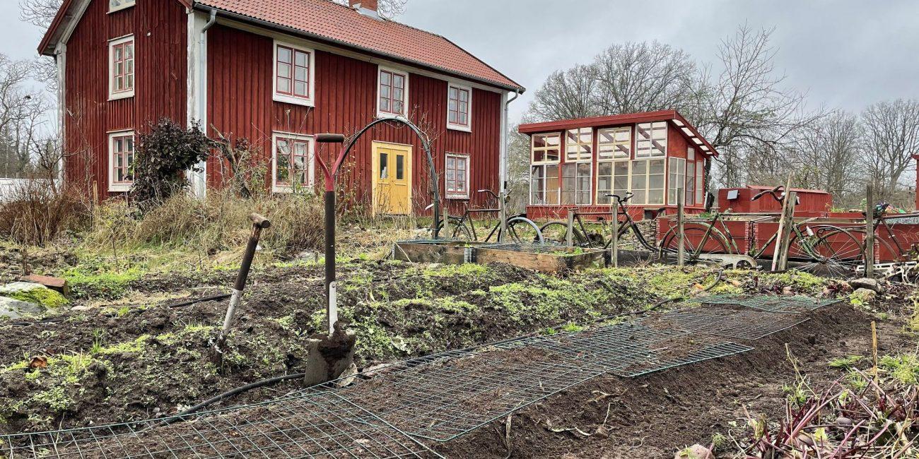 Köksträdgård i höstskrud, med en stor jordig bädd i förgrunden.