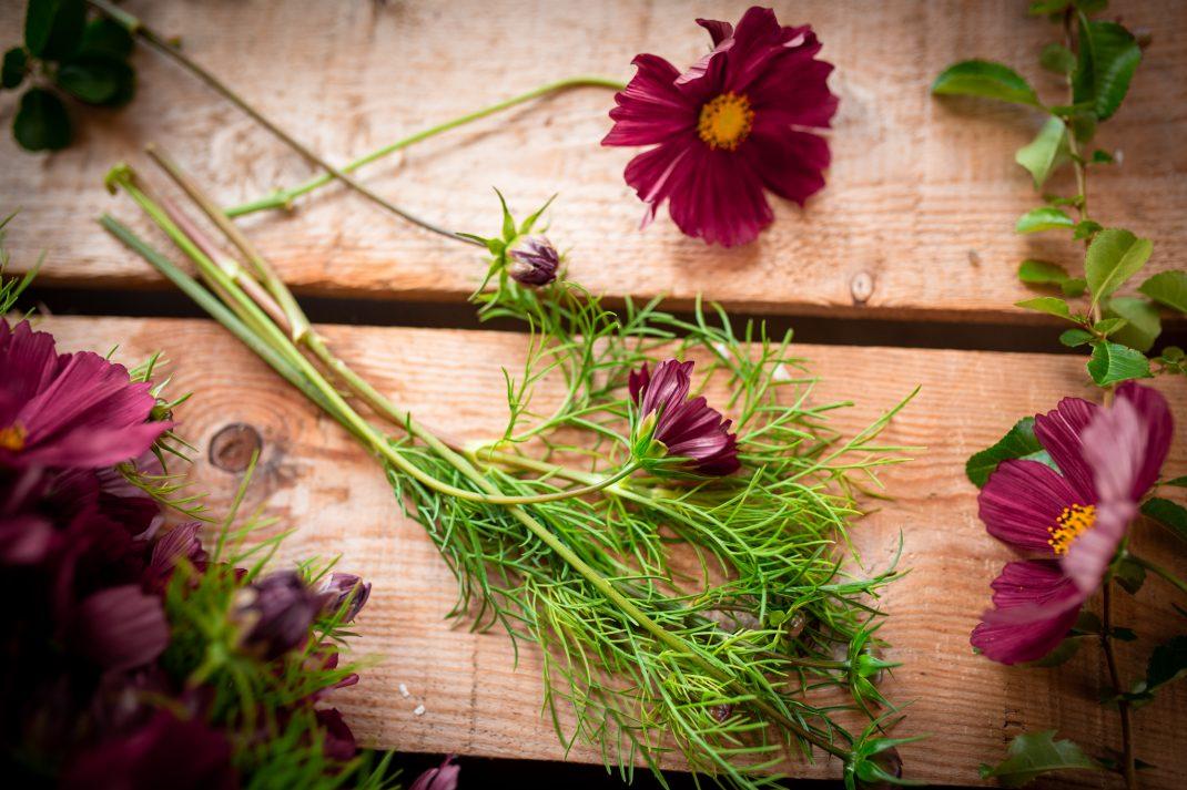 Blommor och blad av rosenskära på en bakgrund av bräder.