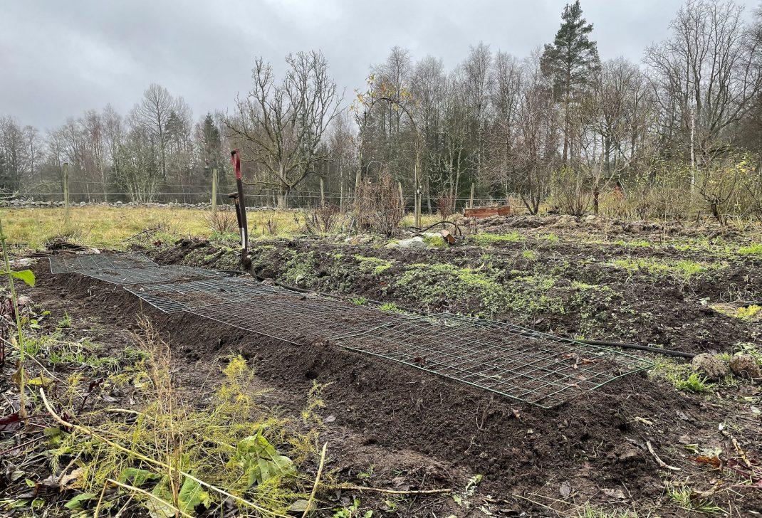 En upphöjd odlingsbädd med kompostgaller på.