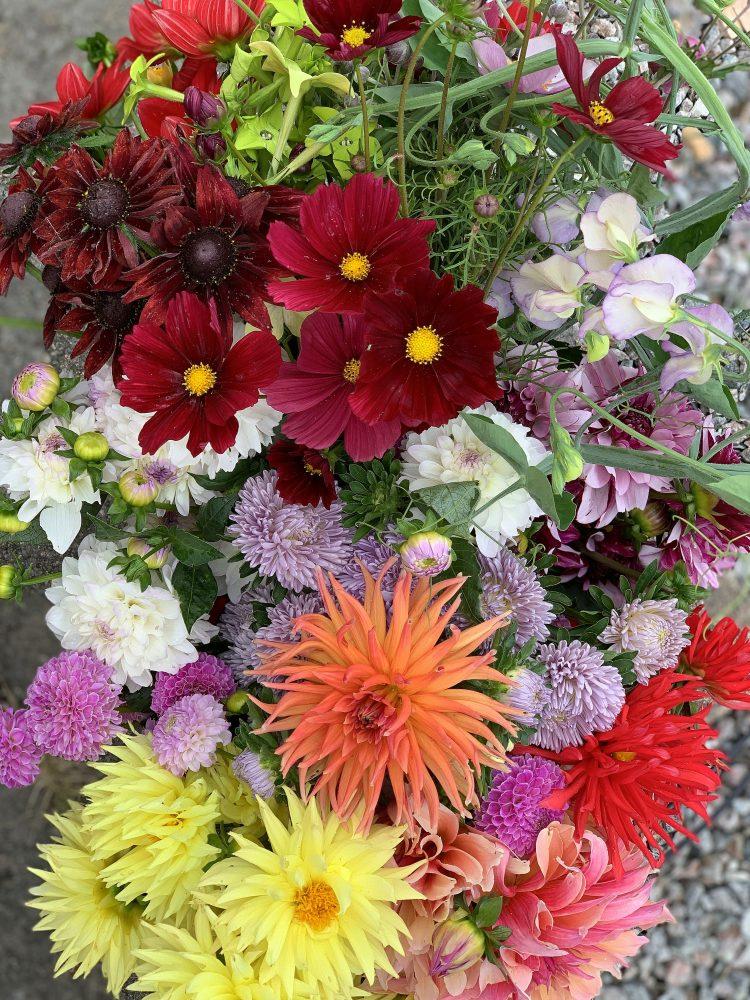 En hink fylld av blandade blommor.