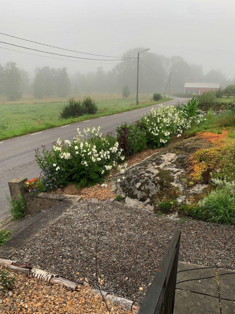 En del av trädgården, med vägen i bakgrunden och bergsrabatten bredvid.
