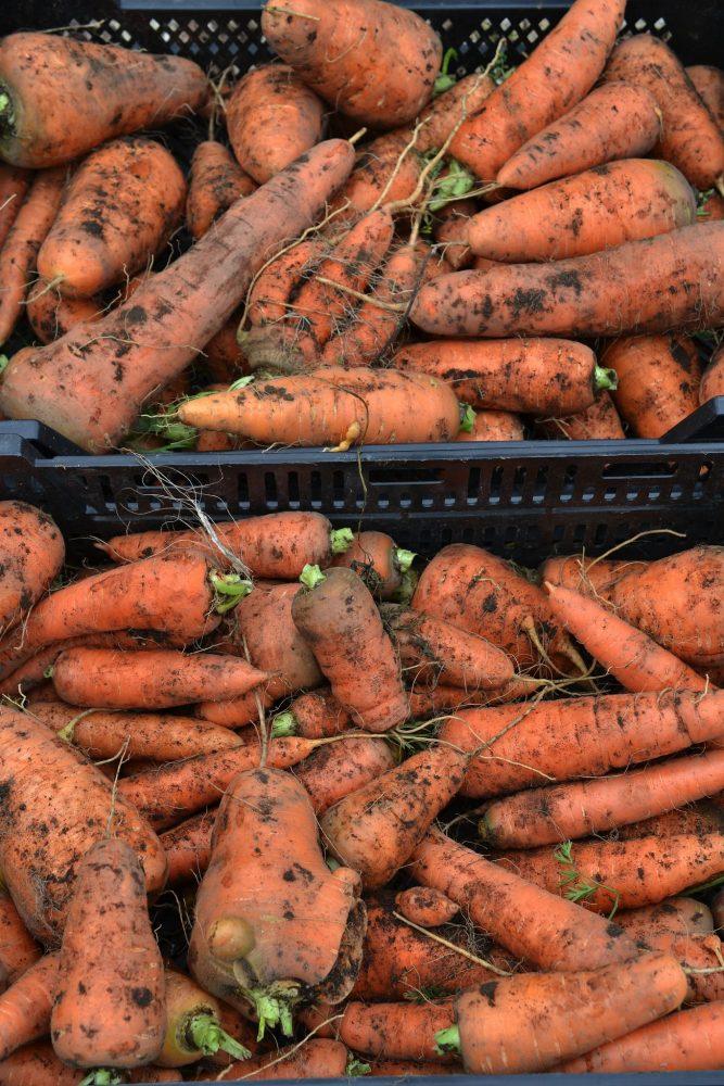 Två backar fyllda med orangea morötter.