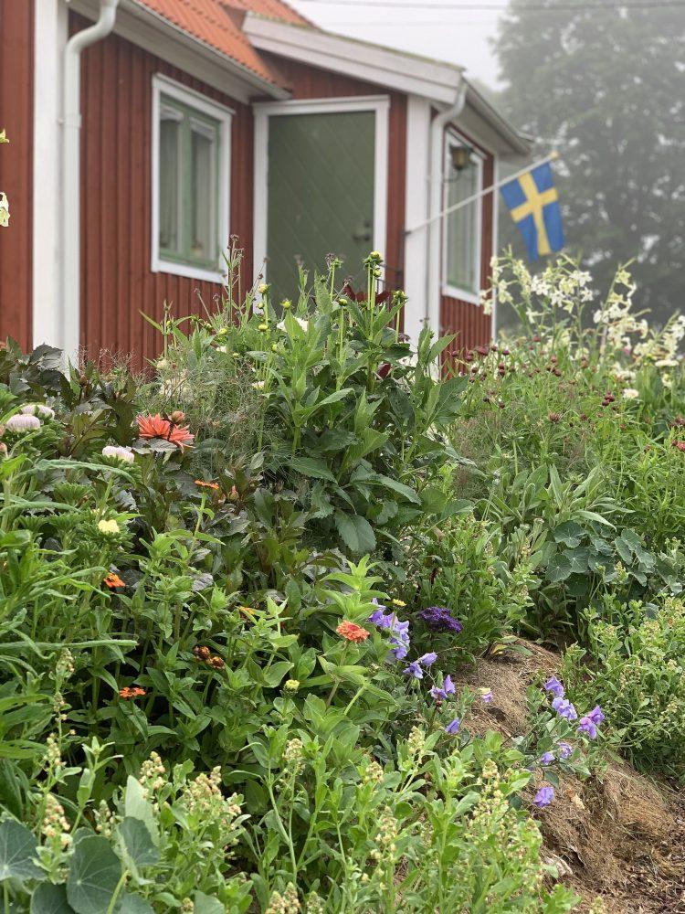 Massor av växter med grönt bladverk framför ett rött litet hus.