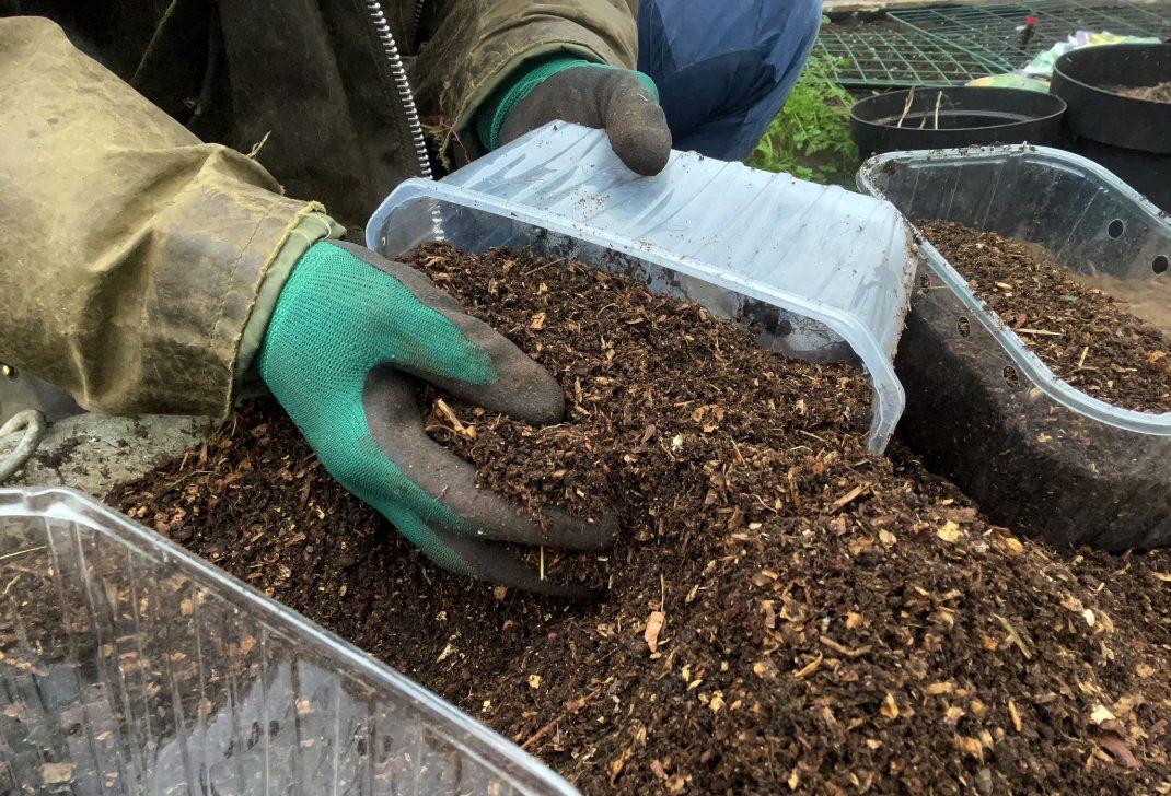 En hand fyller jord i ett plasttråg.