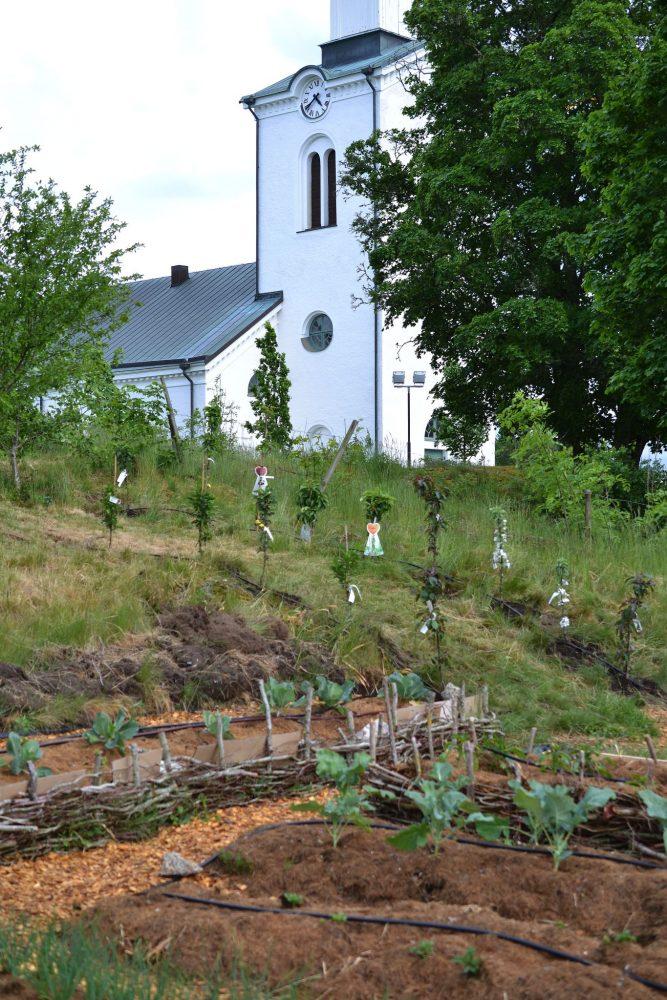 Nyplanterad köksträdgård tidigt på säsongen, med