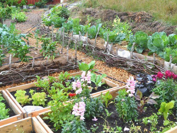 Köksträdgård med blommor och grönsaker.