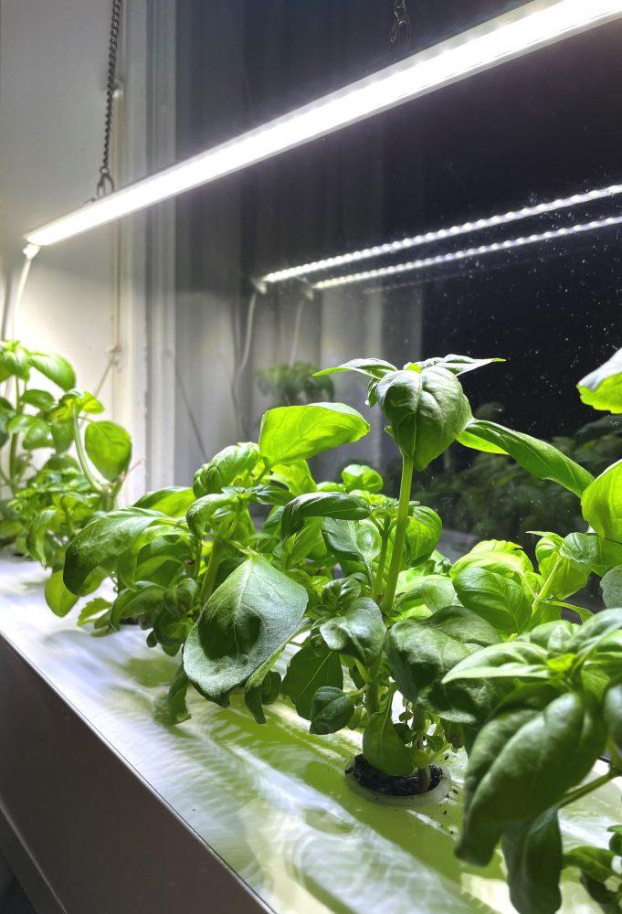 Gröna plantor i en odlingslåda i fönster med växtbelysning över.