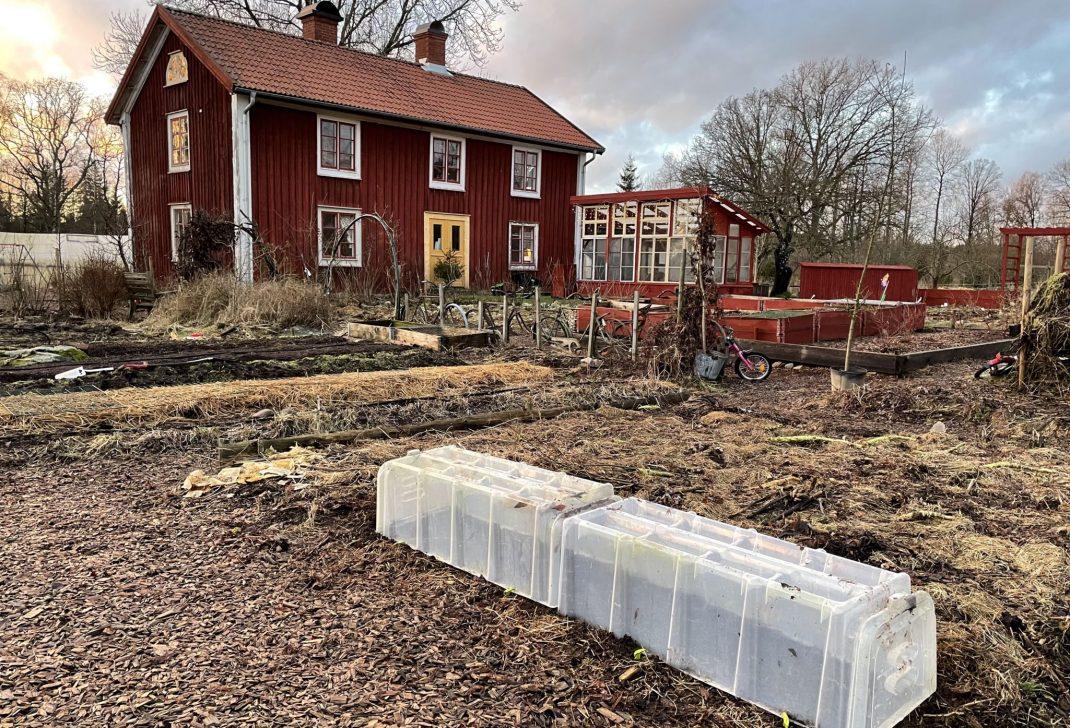 Sent eftermiddagsljus i en annars nedtonad köksträdgård framför ett rött hus.