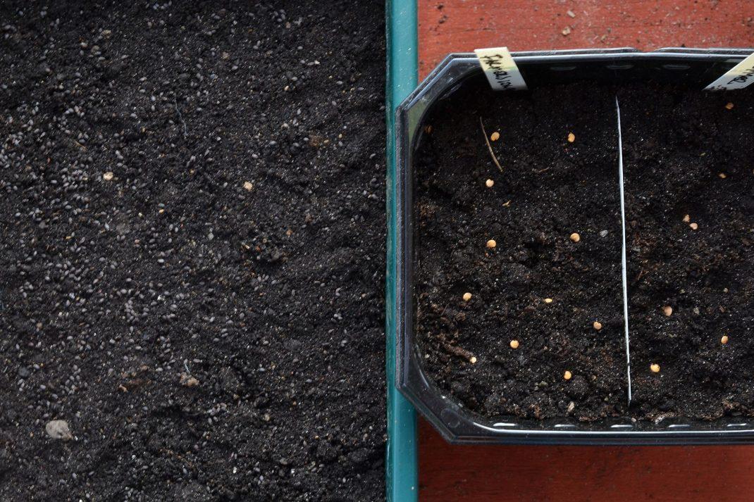 Två såtråg med jord och fröer på toppen.