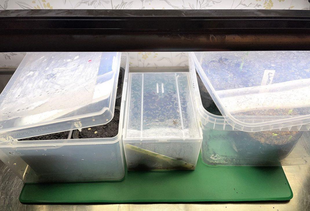 Plastlådor under växtbelysning.