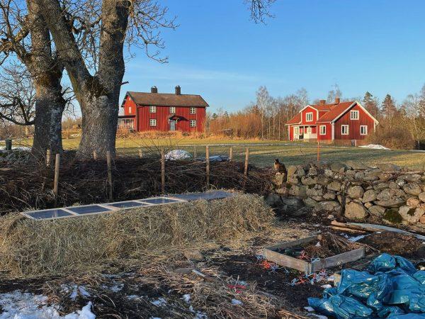 Bild från trädgården med en stor hög halm vid ett staket.