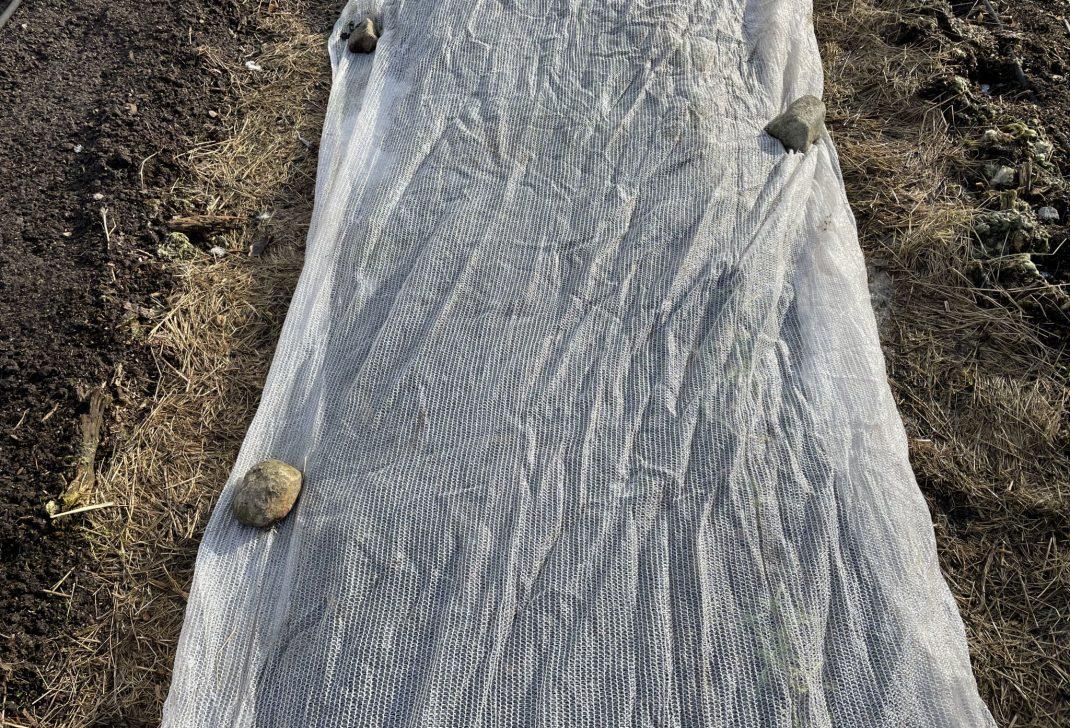 Närbild på en vit duk eller nät på marken.