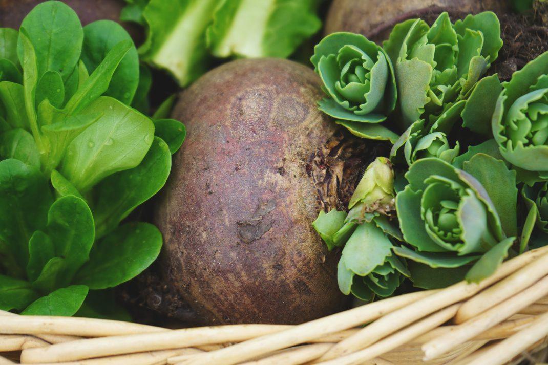 Rödbeta och nyskördade grönsaker