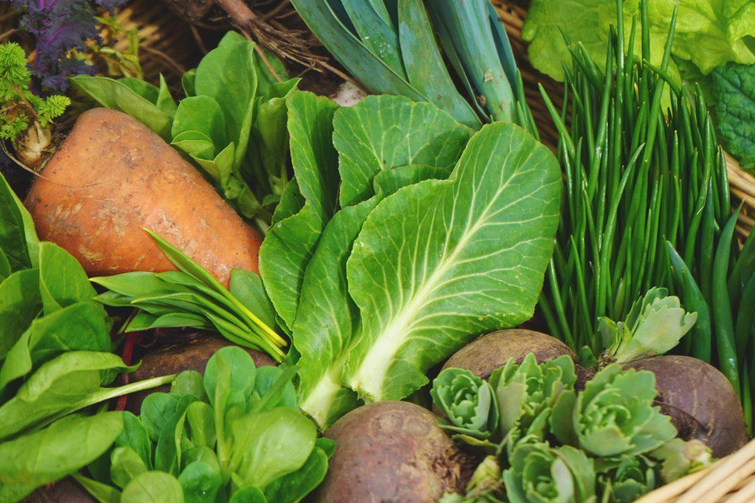 Nyskördade grönsaker