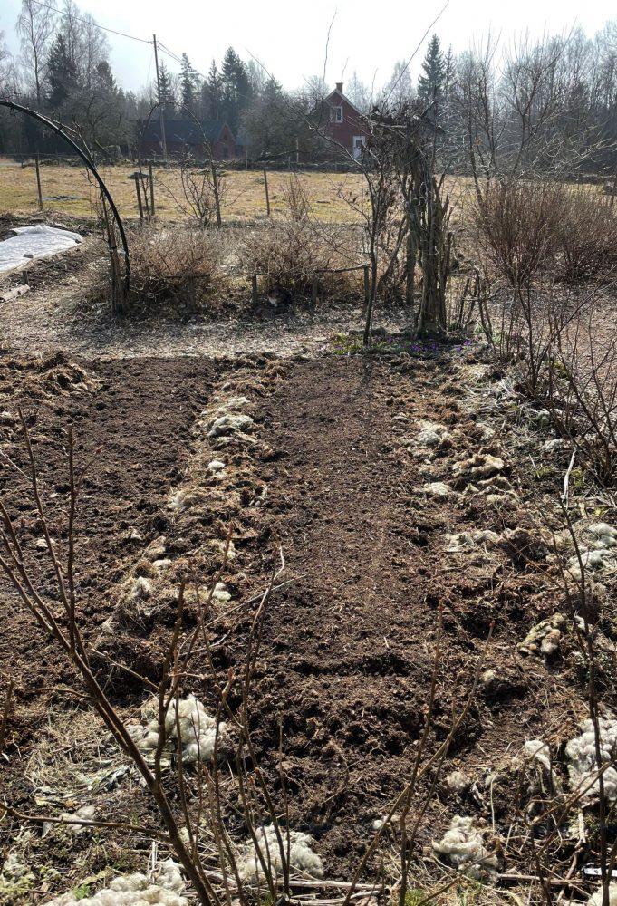 Köksträdgård med bar jord och täckmaterial.
