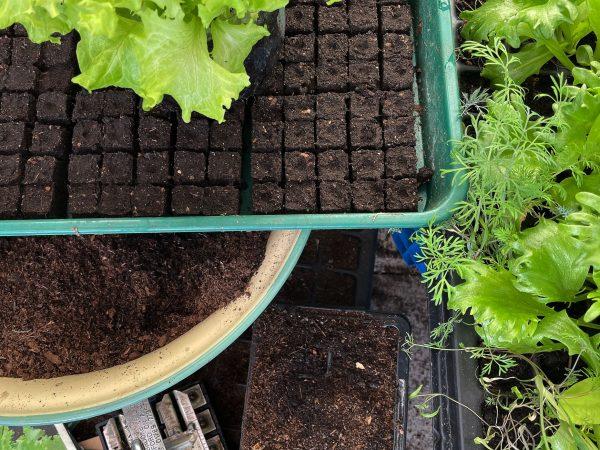 Bild med jord, växter och fröpåsar.