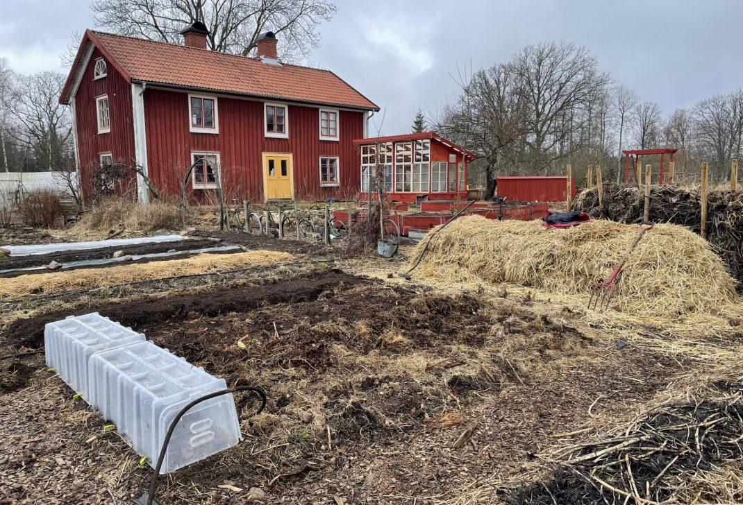 Köksträdgård med halm och många projekt i.