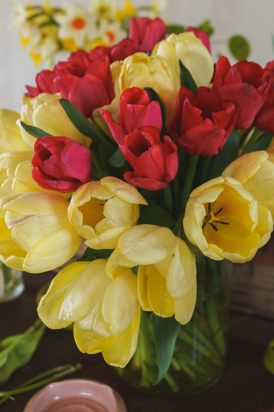 Tulpaner odlade i växthus