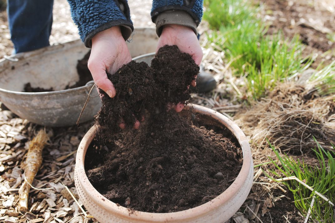 Plantera gräslök i kruka