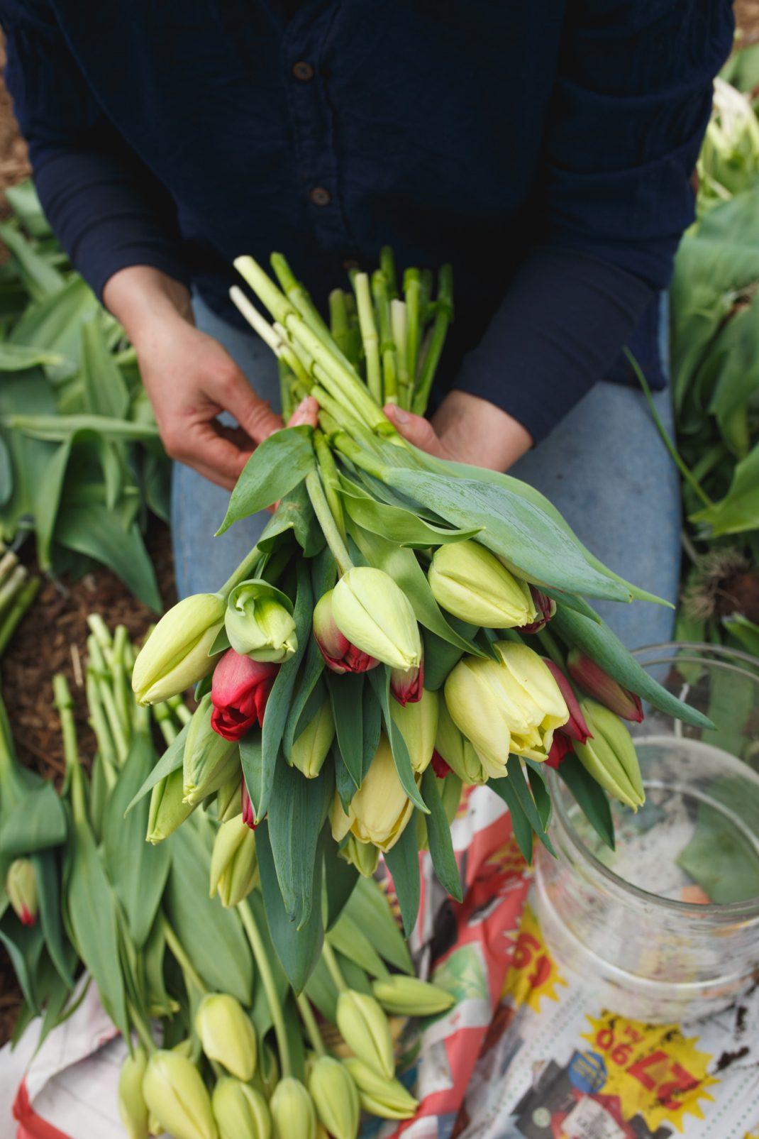 Sara binder bukett av tulpaner