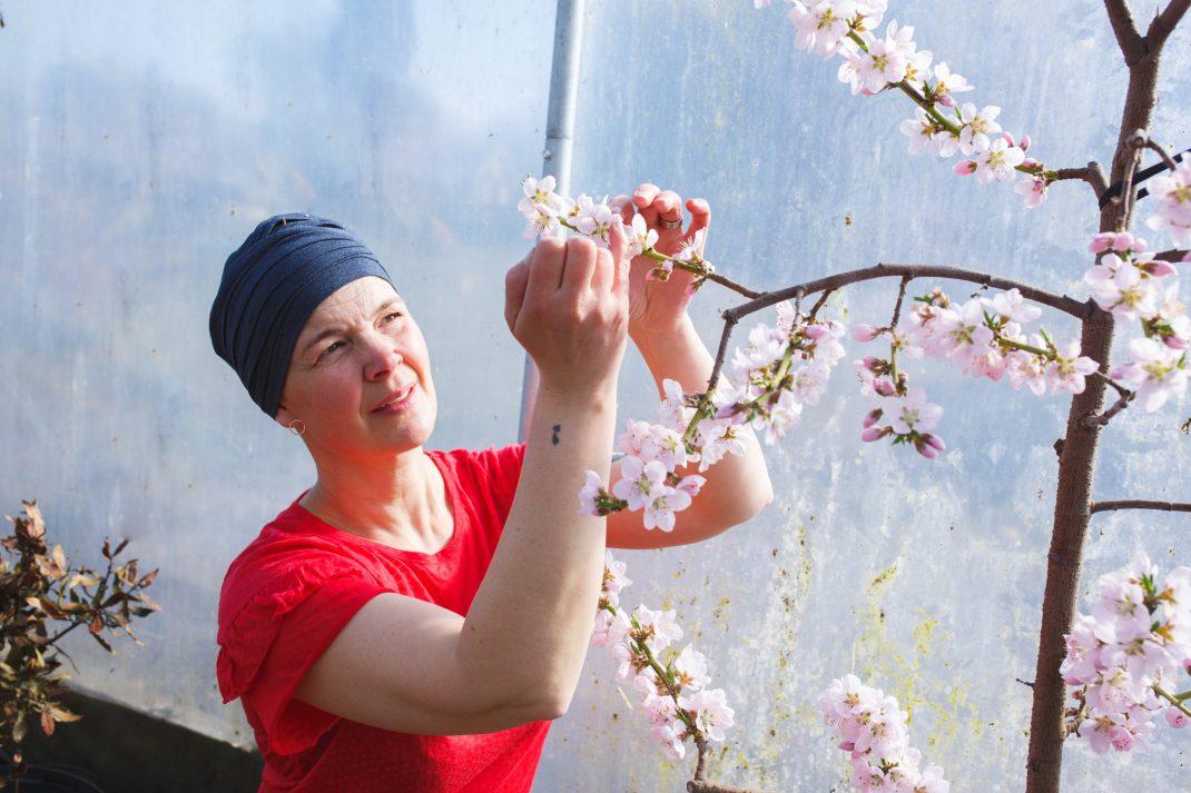 Sara pollinerar persikoträd