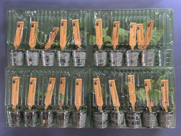 Plantor i en slags plastförpackning.
