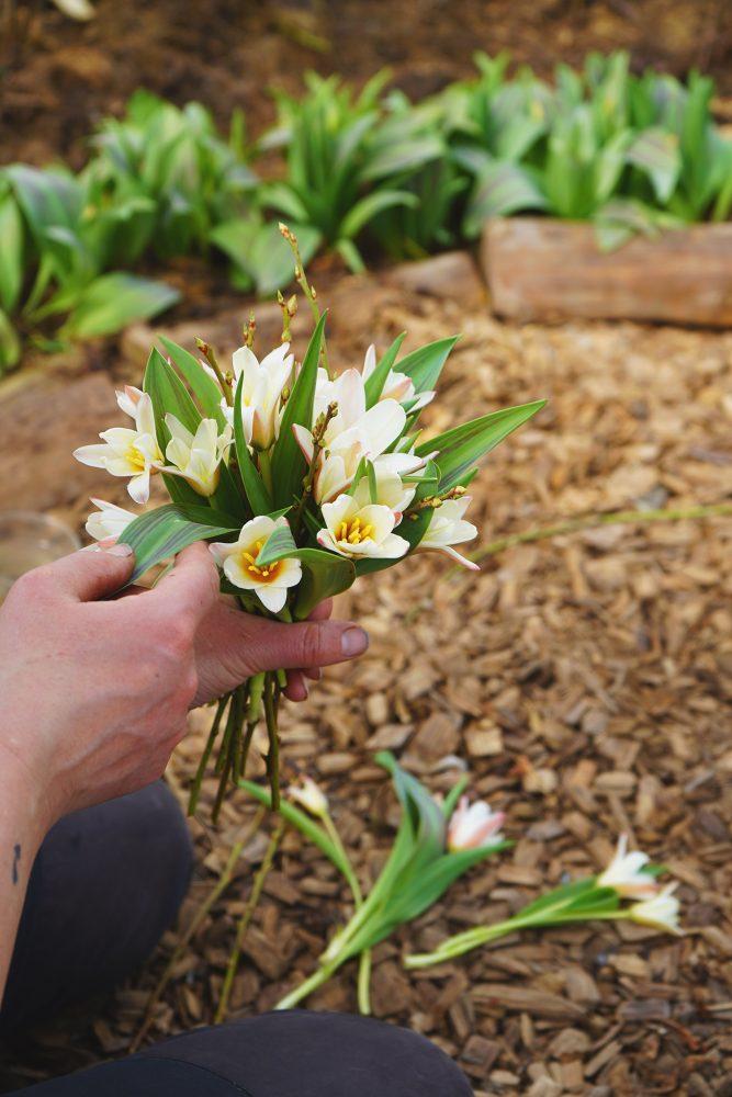 Liten bukett av tulpaner