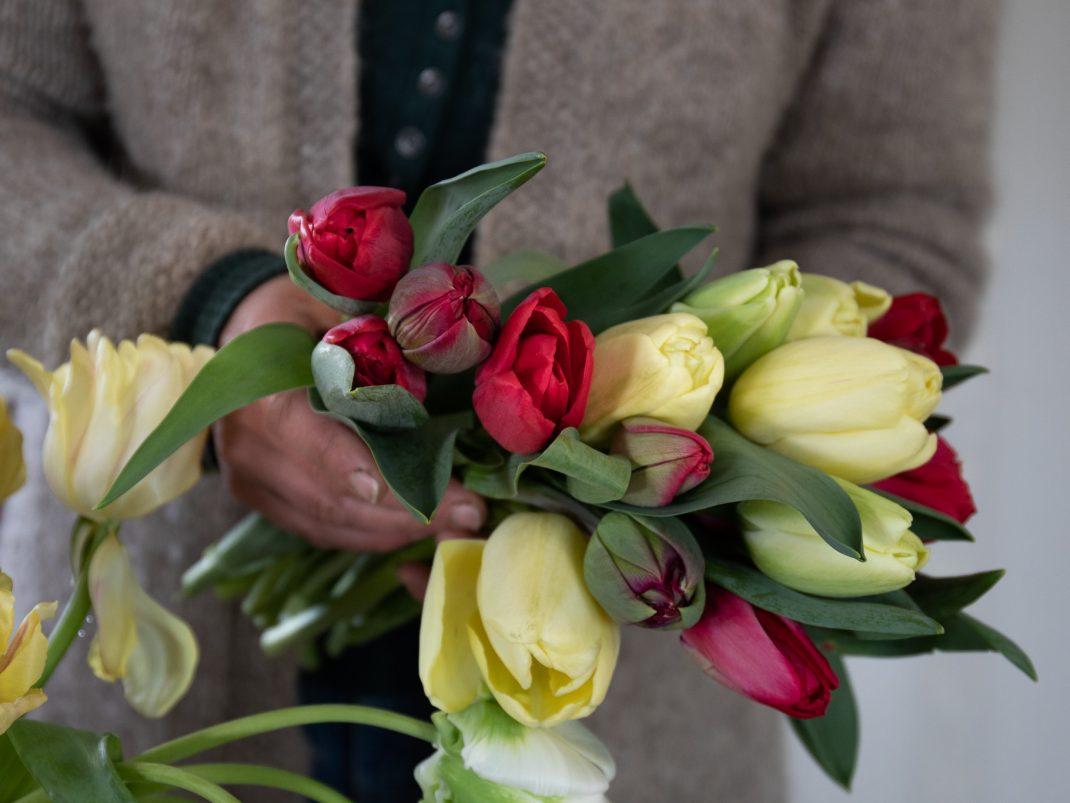 Sara håller ett fång röda och gula tulpaner.