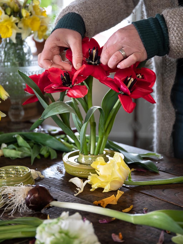 Ett vackert arrangemang av röda utvikta tulpaner i en blomhållare.