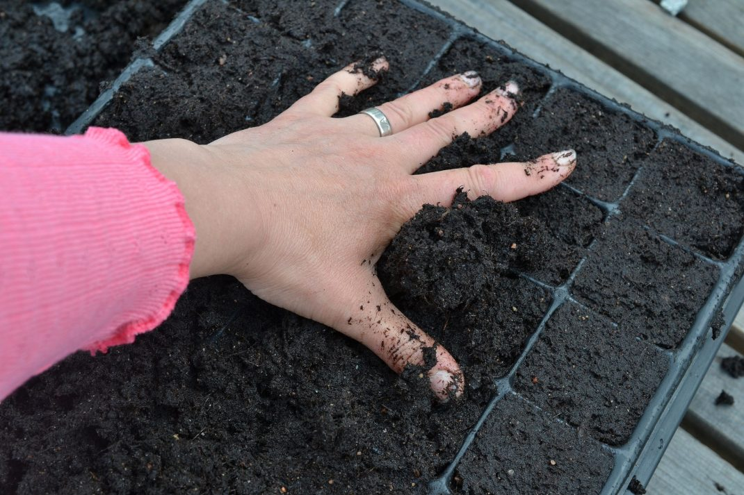 Odlar sojabönor, en hand pressar ner jord i ett pluggbrätte.