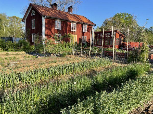 köksträdgård framför ett rött hus med två skorstenar
