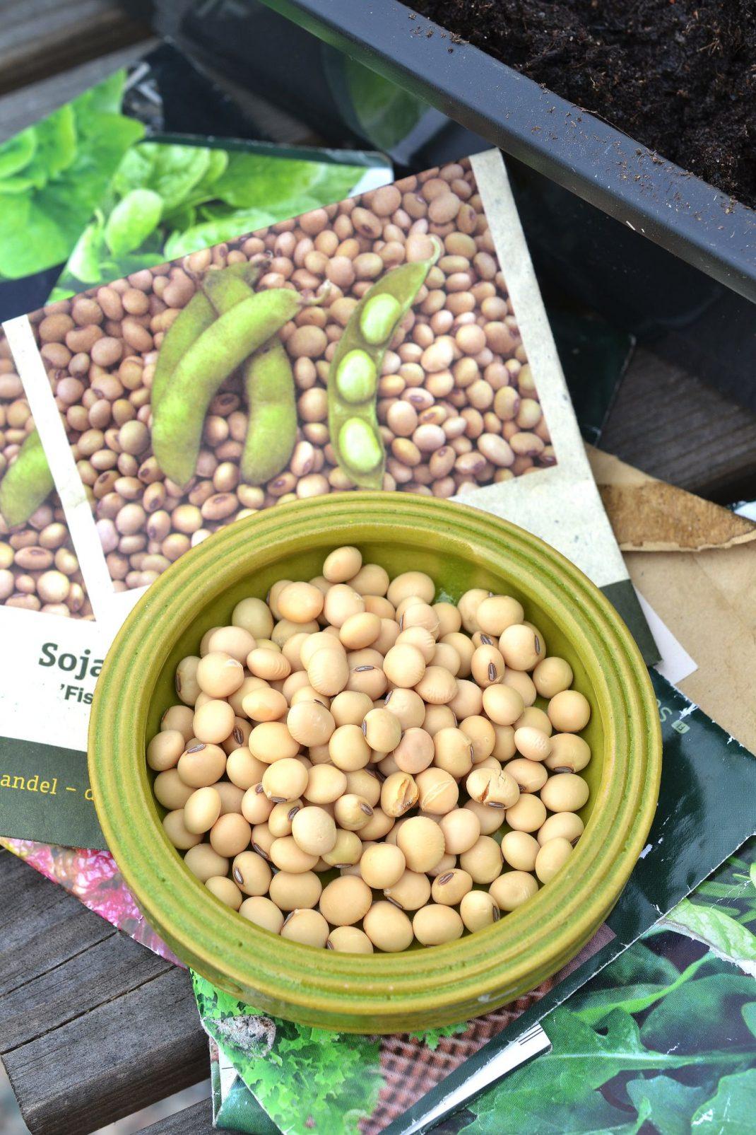 Odlar sojabönor, närbild på ljusa bönor i en grön skål.