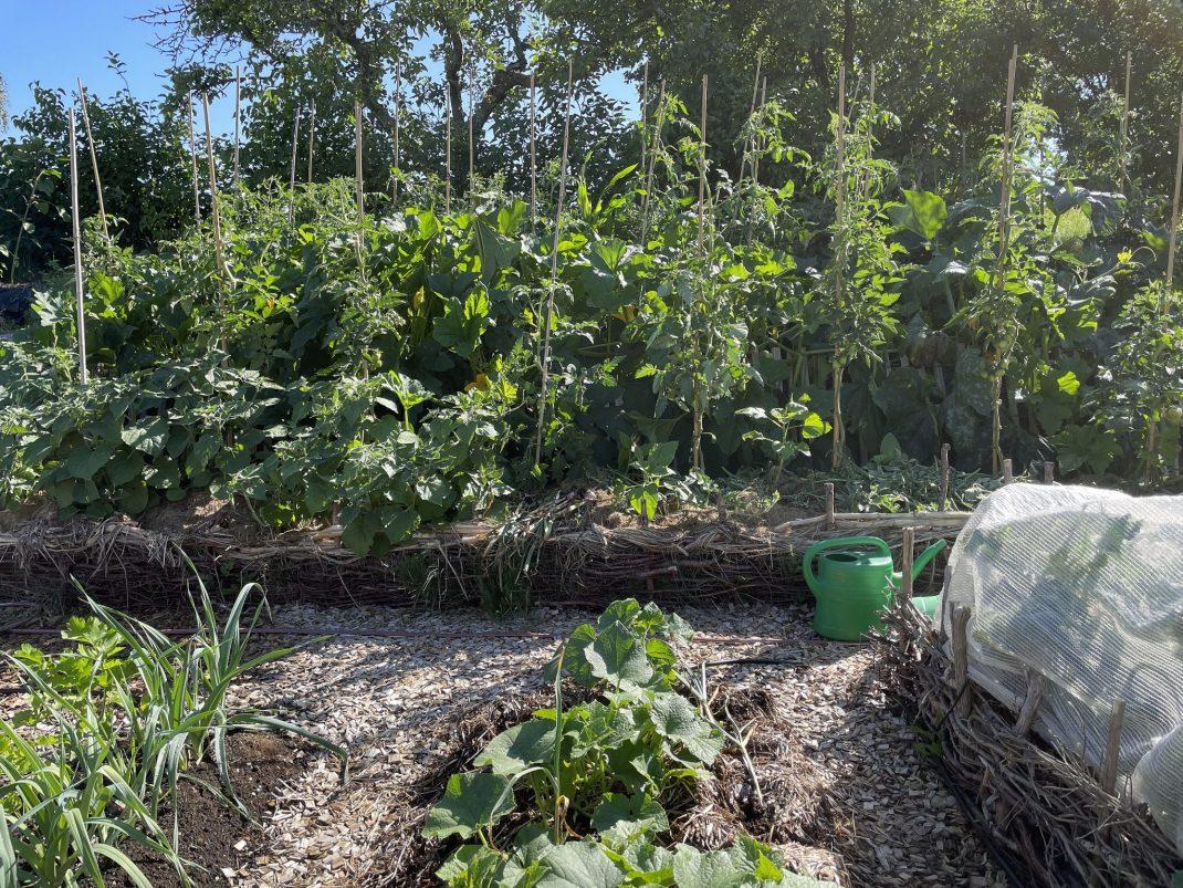 En frodig grön växtplats i en sluttning.