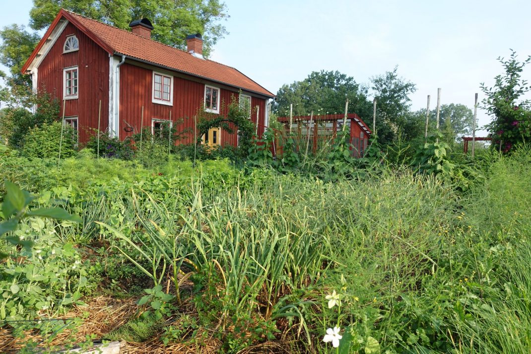 Köksträdgård framför rött hus.