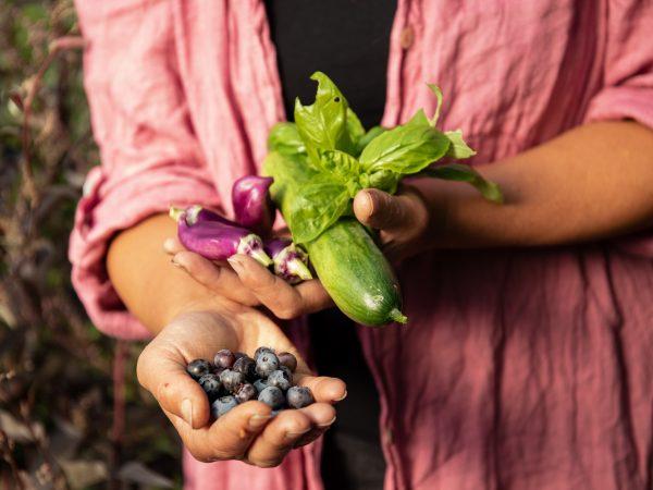 Sara håller nyskördade godsaker i händerna - blåbär, paprika, gurka och basilika.