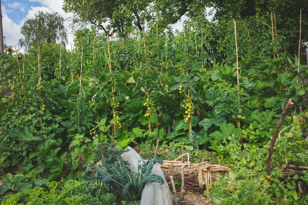 Upphöjda bäddar med olika grönsaker i
