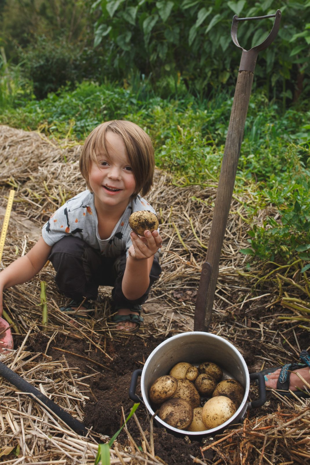 Loa med potatis i handen