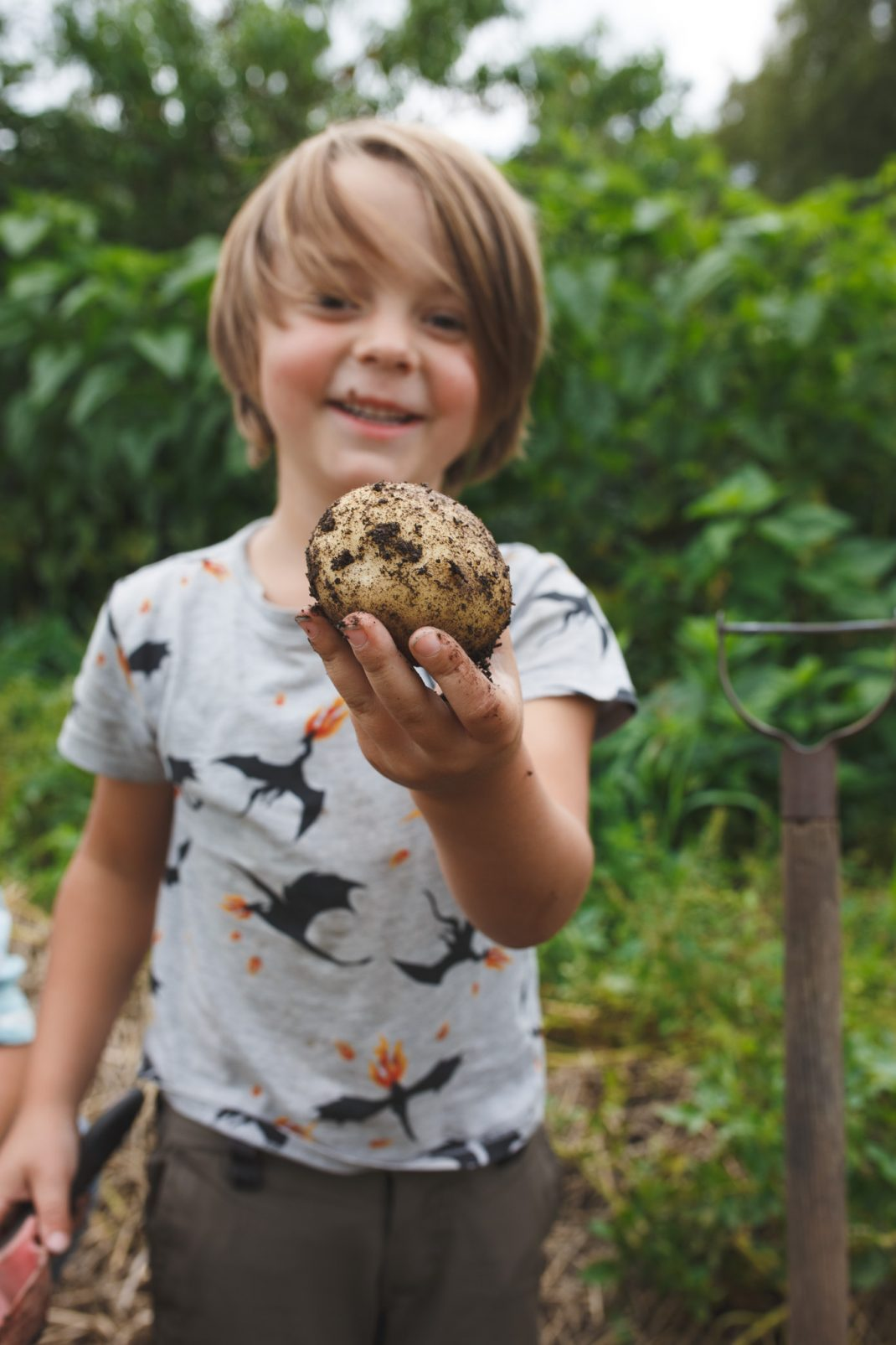 Potatisar från landet