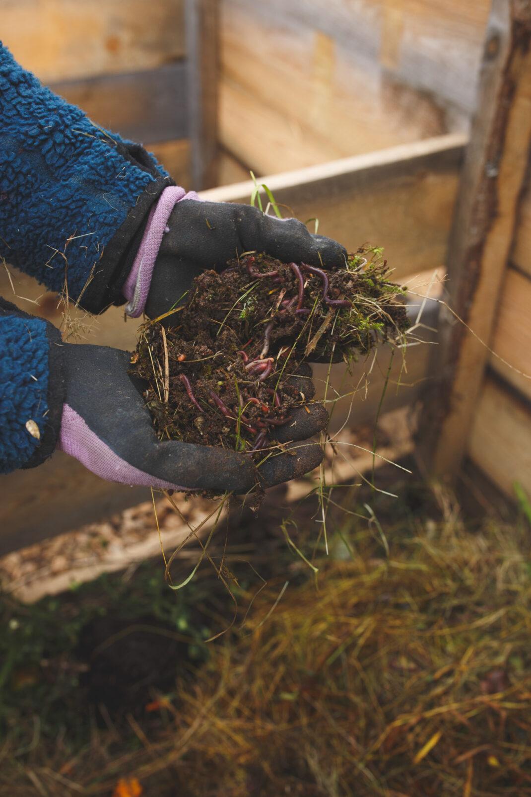 Sara anlägger kompost och lägger i maskar i nya komposten