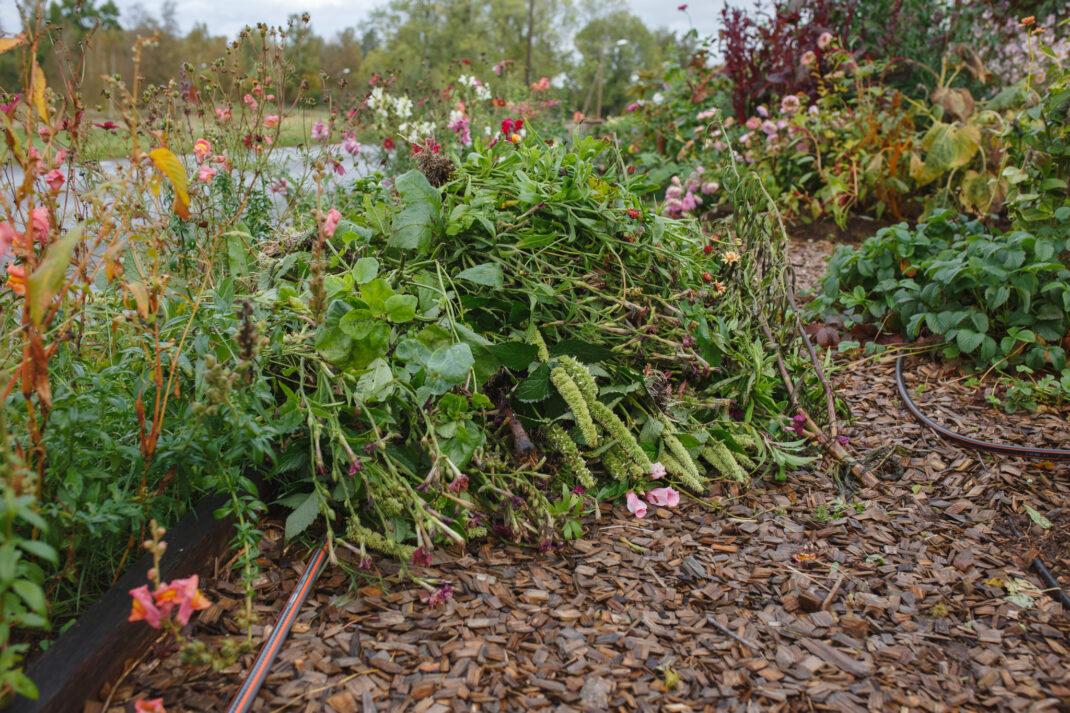 Växtmaterial från trädgården