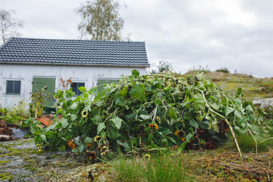 Växtmaterial till kompostkvarnen