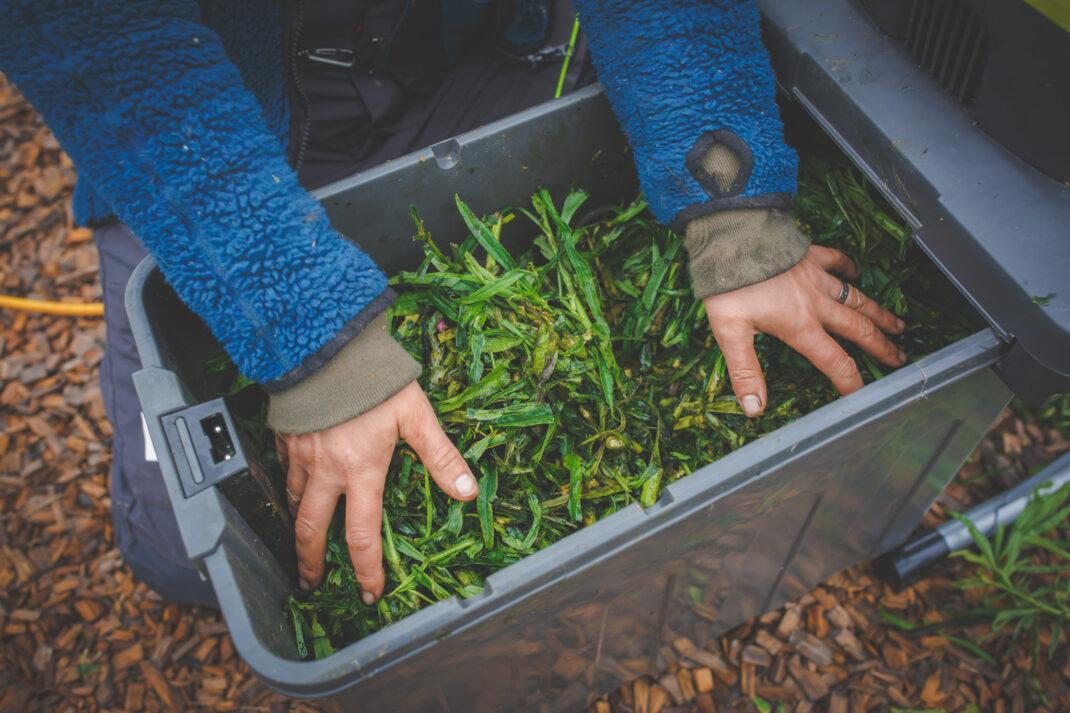 Växtmaterial till komposten