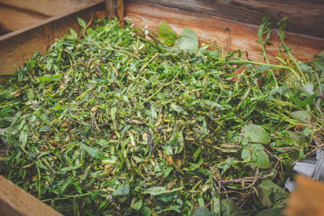Växtmaterial från kompostkvarnen i komposten
